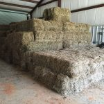 Bales of hay in barn